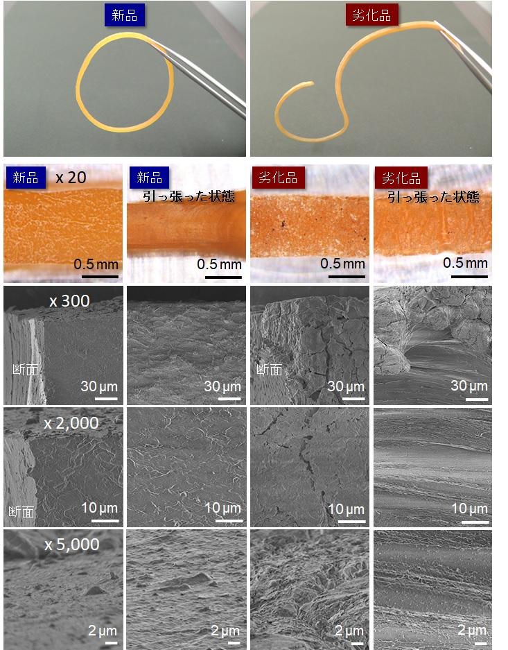 輪ゴムの電顕観察